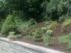 plantings-4